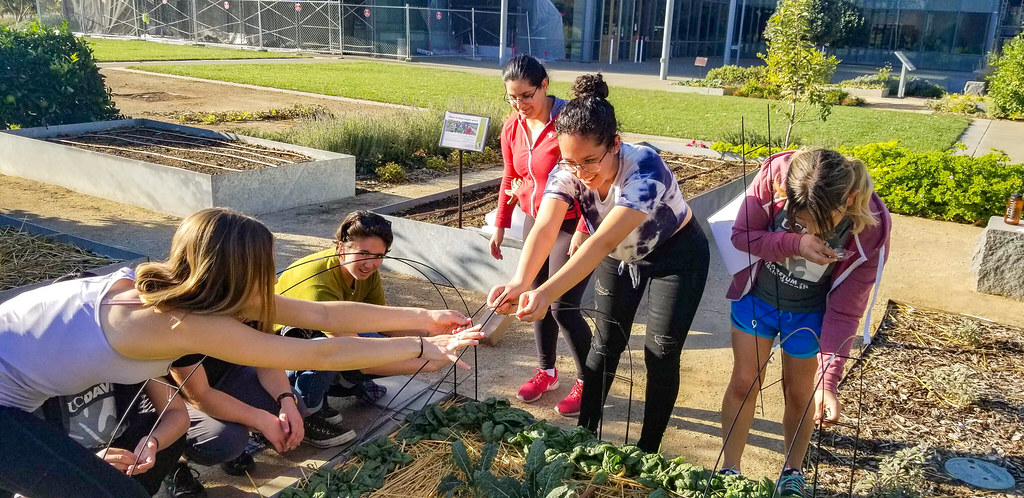 Edible Landscaping 2019-2020