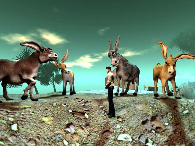 Donkeys by Cica Ghost -Four Donkeys and An A....Mazing Guy ;-)