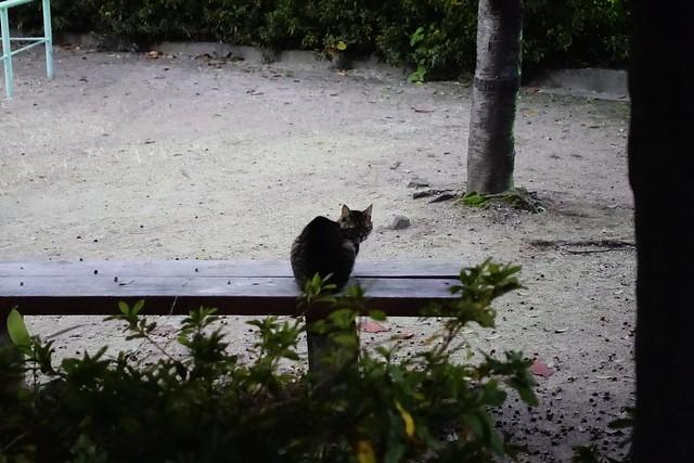 Today's Cat@2019-12-12