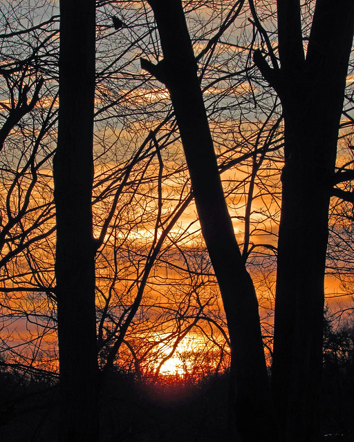 Sunrise Through Trees_2337