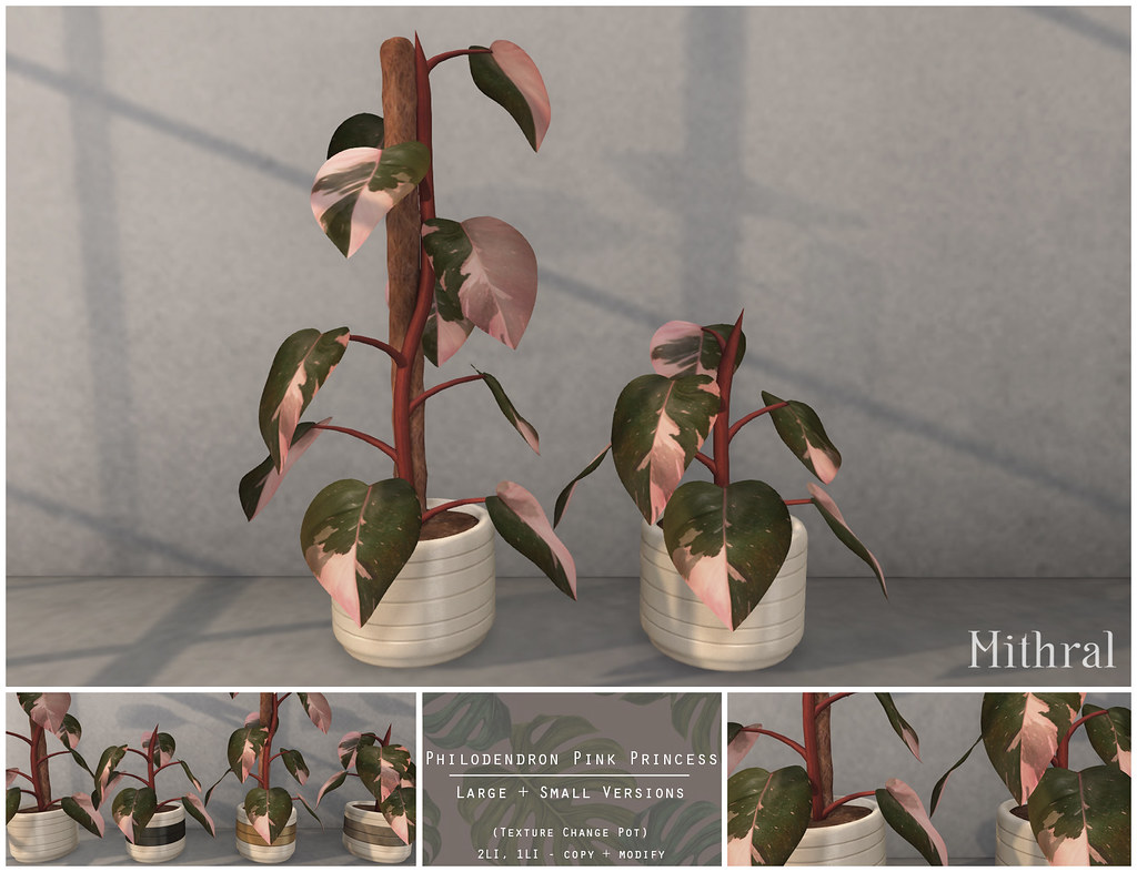 Mithral Apothecary    -   Philodendron Pink Princess   @ equal10