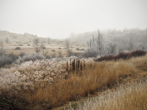 Frost and fog at Bennington