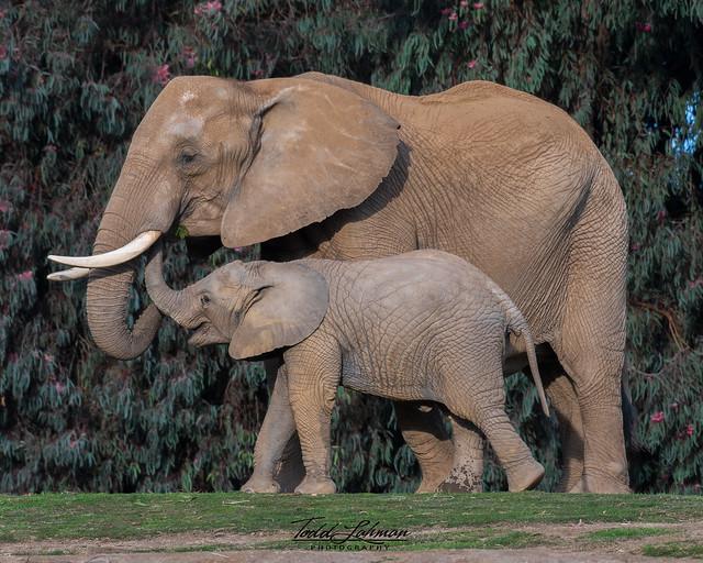Umngani and Daughter Mkhaya