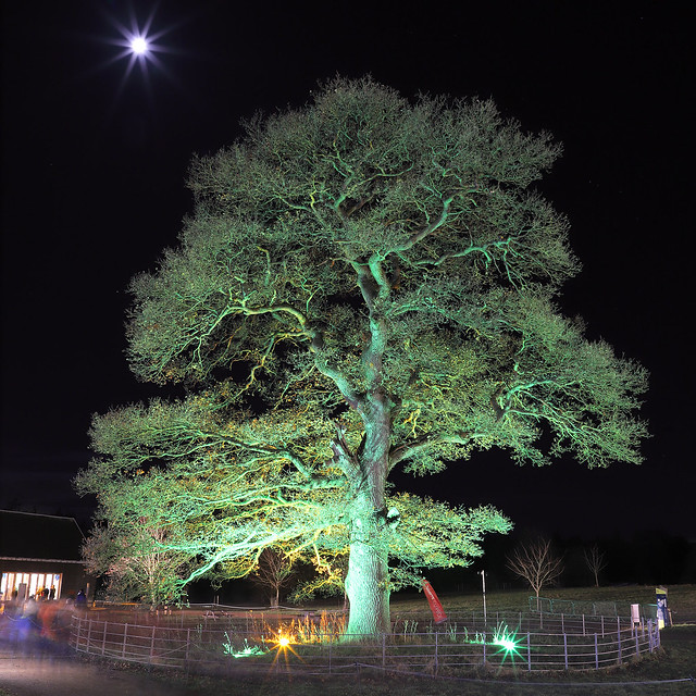 Great oak tree and the Moon