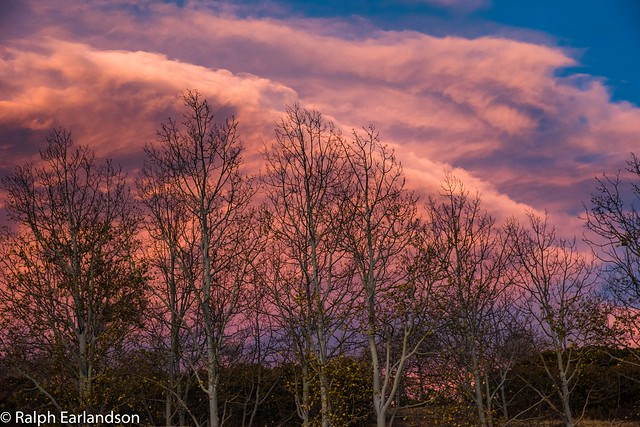 Red Sky, Bare Trees