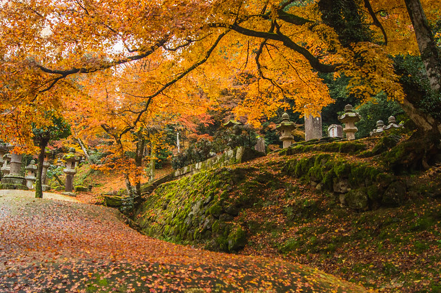 A Portrait of Autumn 16