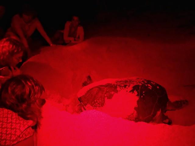 Testigos del desove de una tortuga marina en Santo Tomé y Príncipe