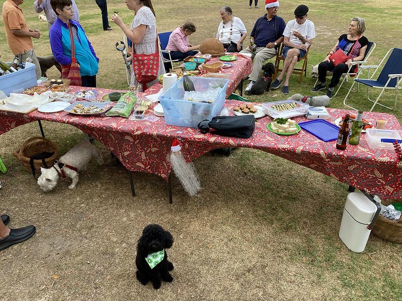 Dog park party