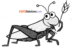 KSEEB Solutions for Class 6 English Prose Chapter 5 A Chat with a Grasshopper 1