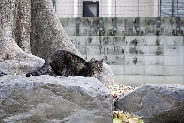 Today's Cat@2019-12-13