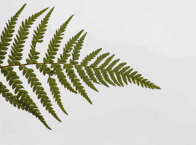 Imperfect Fern
