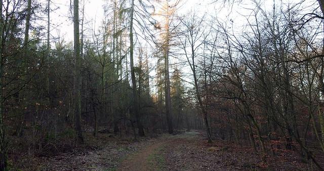 Revier Blankenfelde Herbst 2019  Huttewald