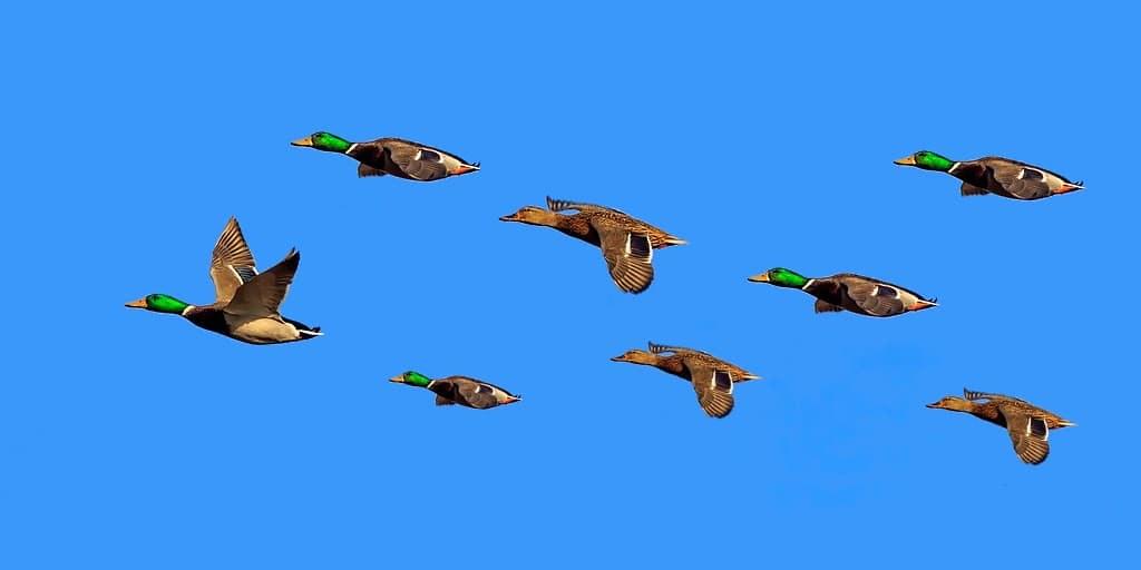 aibus-va-tester-des-en-formation-pour-réduire-les-émissions-de-carbone
