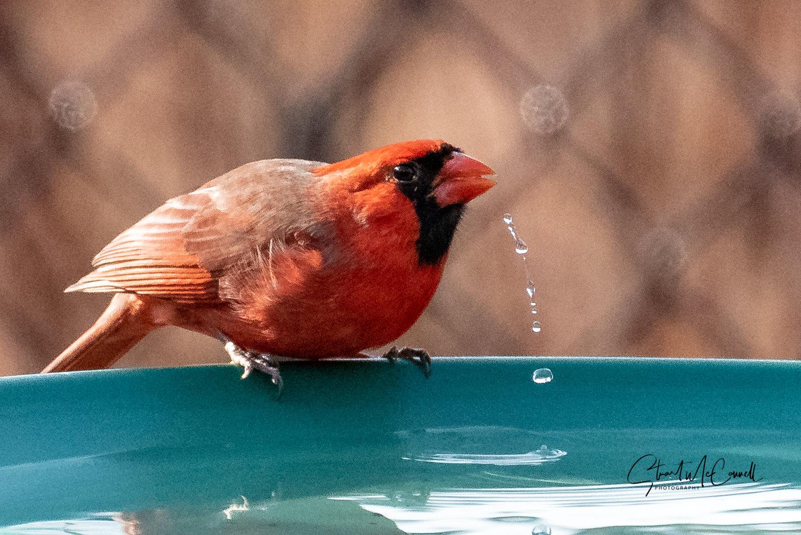 Cardinal sip