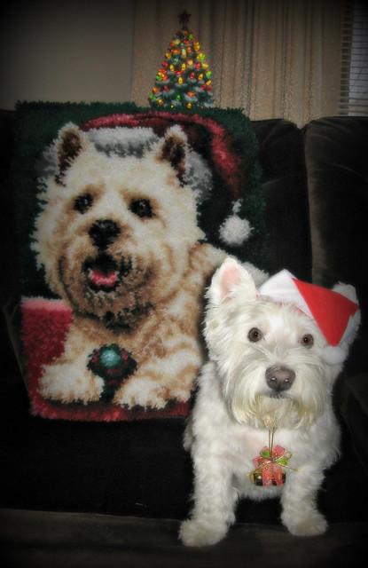 12/12A ~ Riley at Christmas!