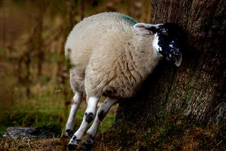 🐏 Drunk and Disorderly 🐏
