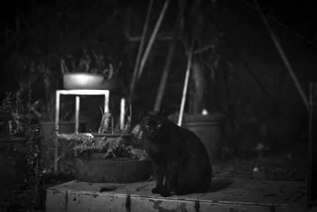 Black cat - eerie version