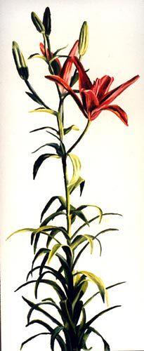 ציור פרחים ציורים הפרחים  ציורי פרח צייר  הפרח ציירים פורח צבעוני  הרישום רישומי  רפי פרץ אמנות  ישראלית מודרנית  רישום מודרני עכשווי ישראלי