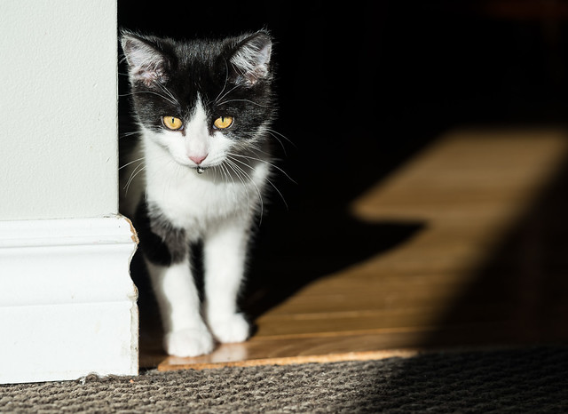 'Kitten Corner'