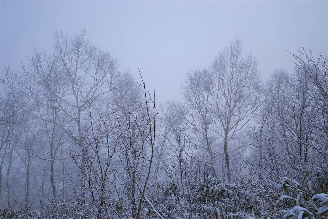 モノクロの霧氷