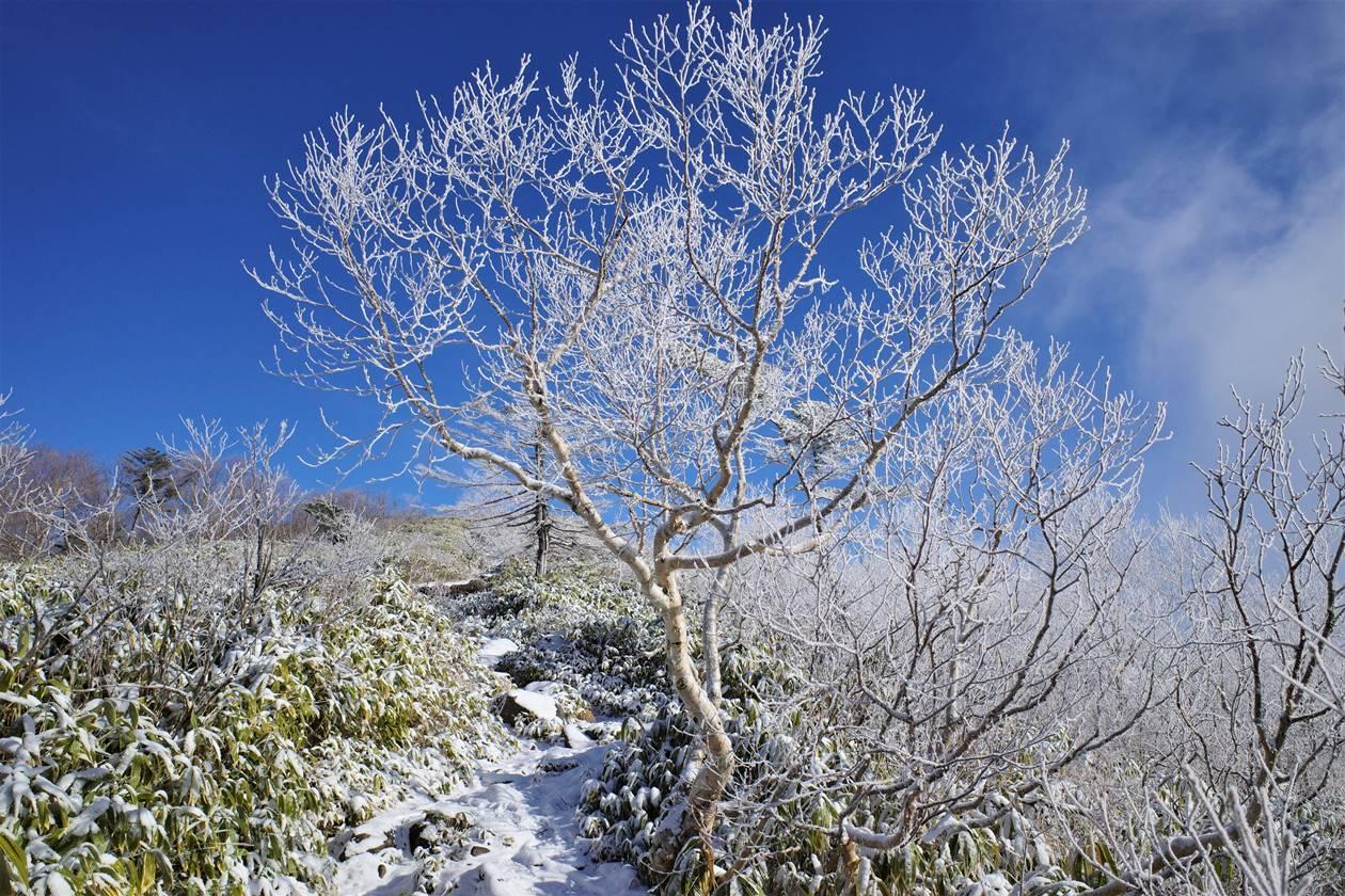 飯縄山 霧氷登山