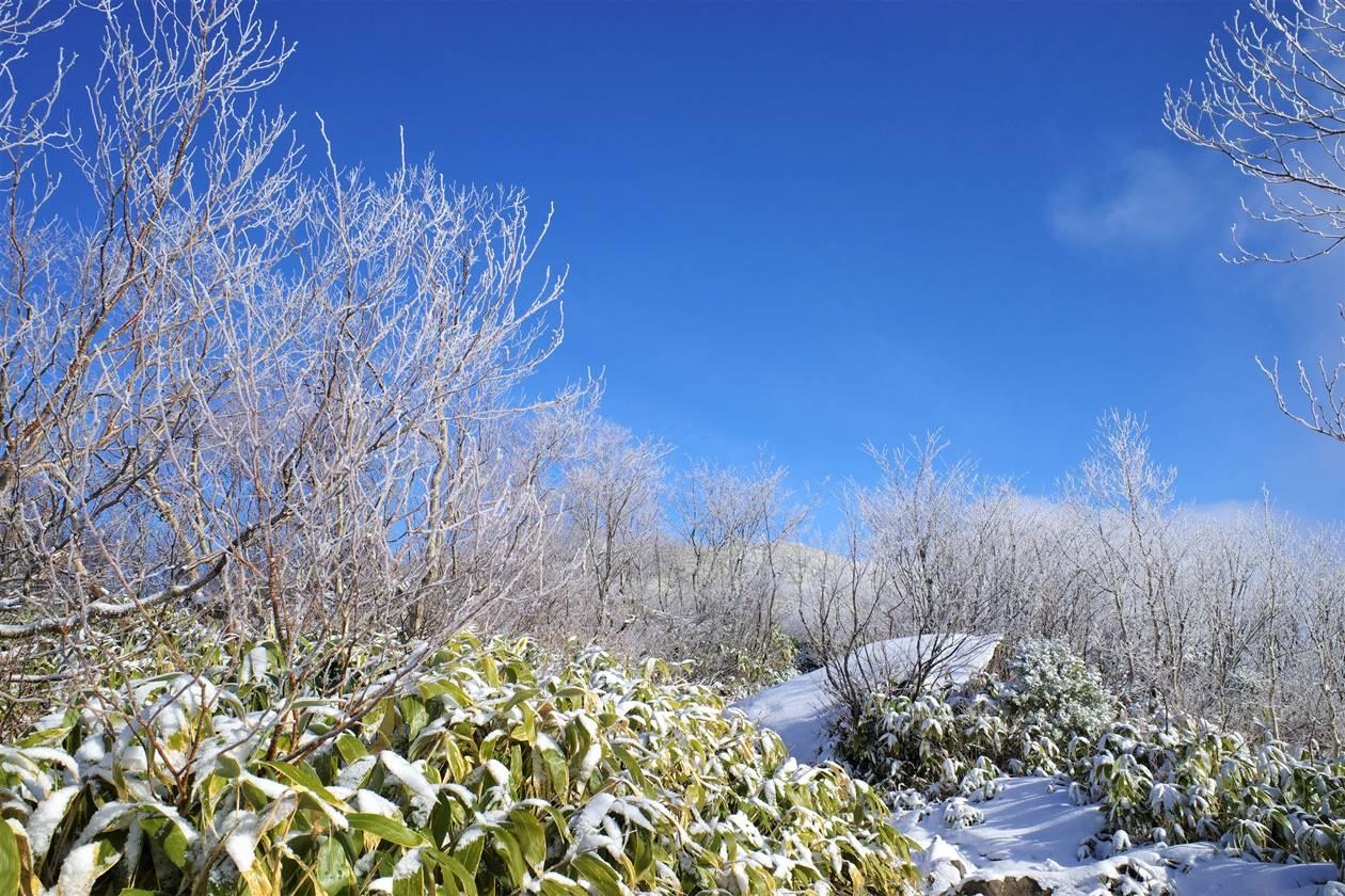 飯縄山 山頂稜線の霧氷