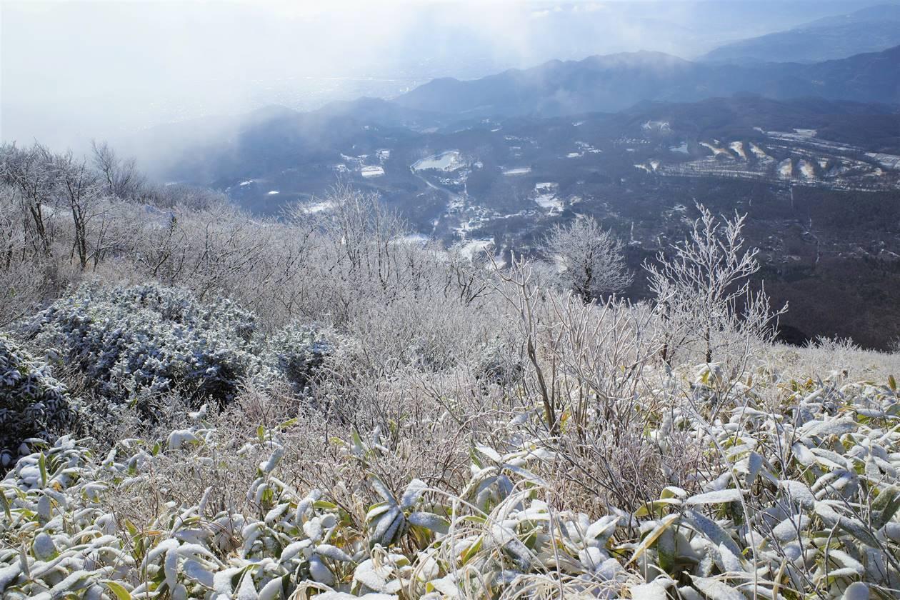 飯縄山の霧氷風景