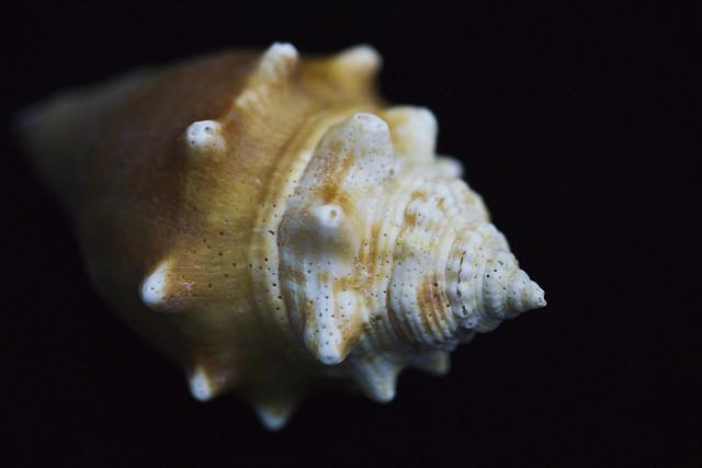A Nice Shell