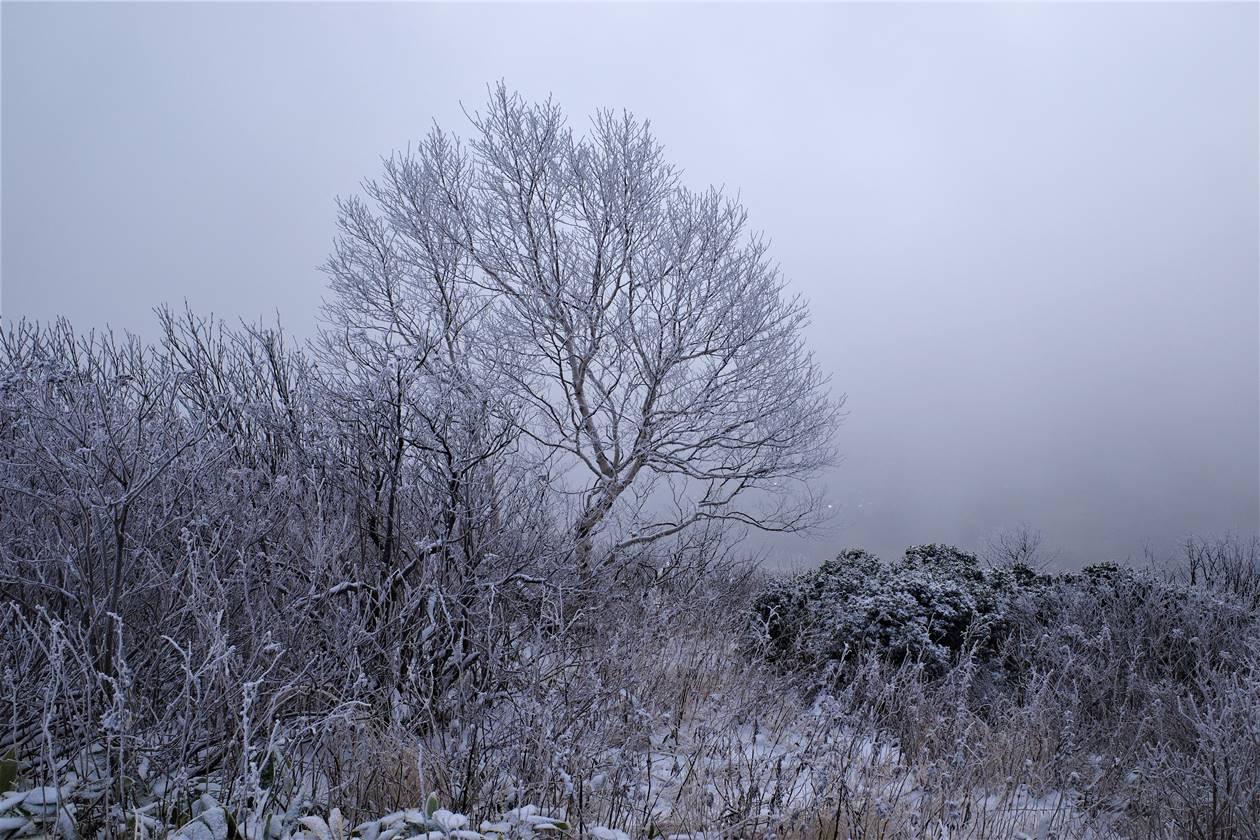 モノクロの霧氷風景
