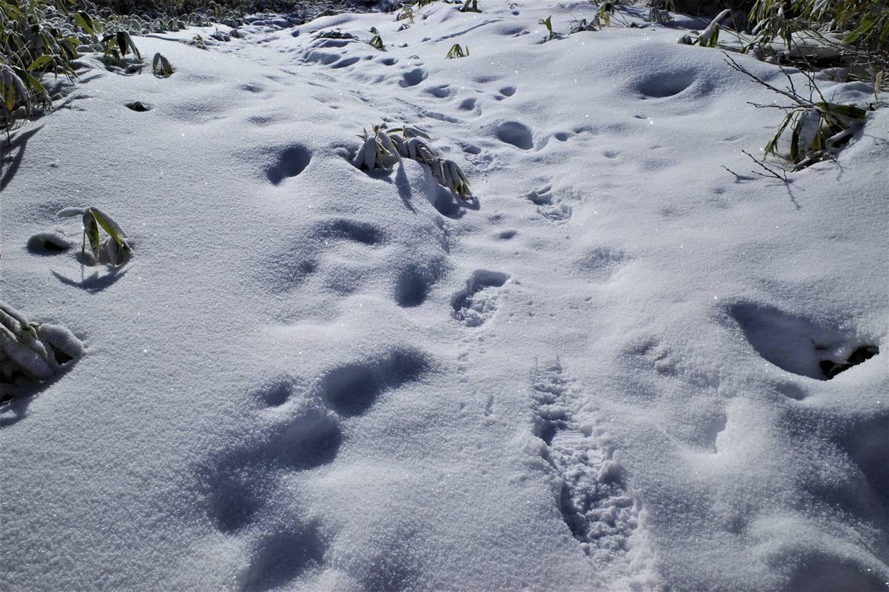 飯縄山 雪山ハイク
