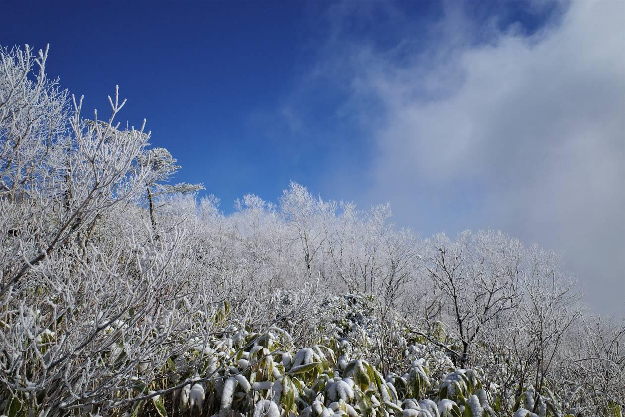 飯縄山の霧氷