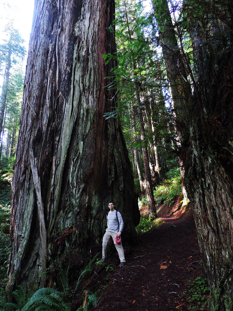Travel Tips For California: Northern Redwoods, California, USA