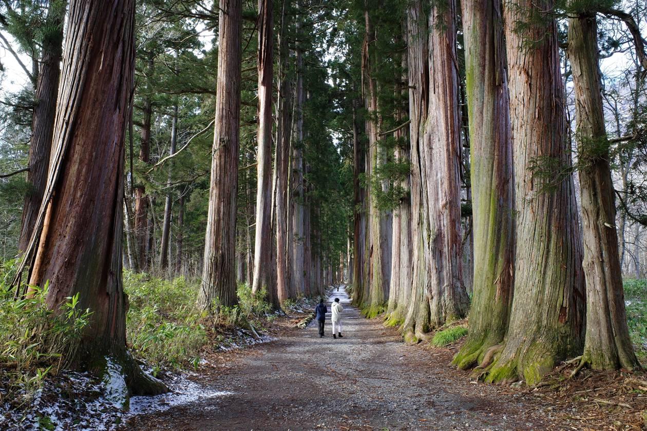 戸隠神社の杉並木
