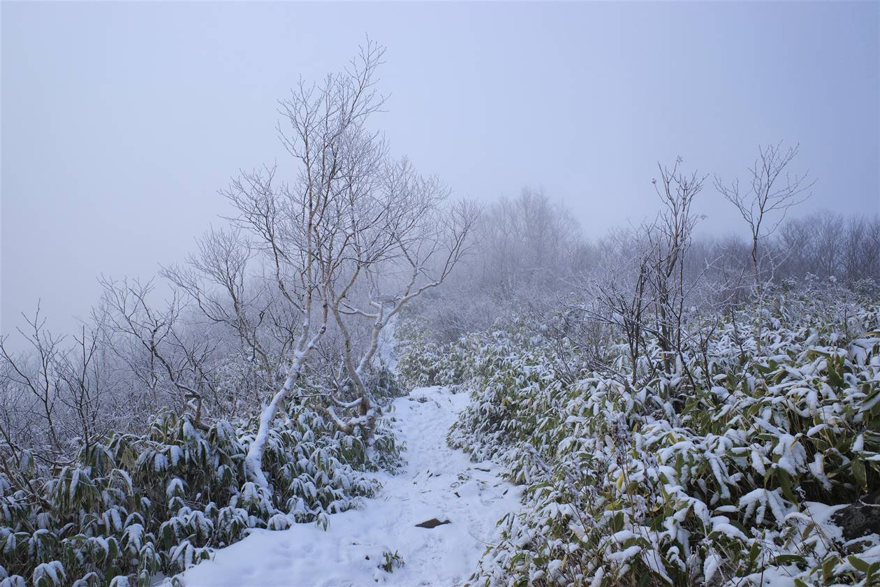 飯縄山 雲の中の霧氷