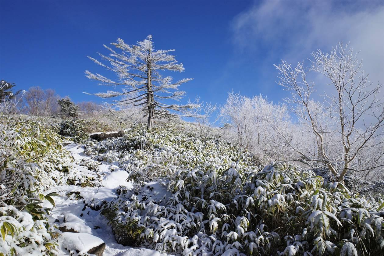 飯縄山 霧氷のクリスマスツリー