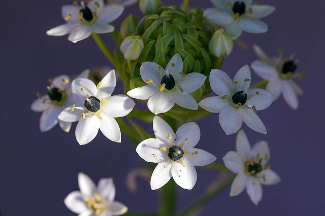 內人種的花