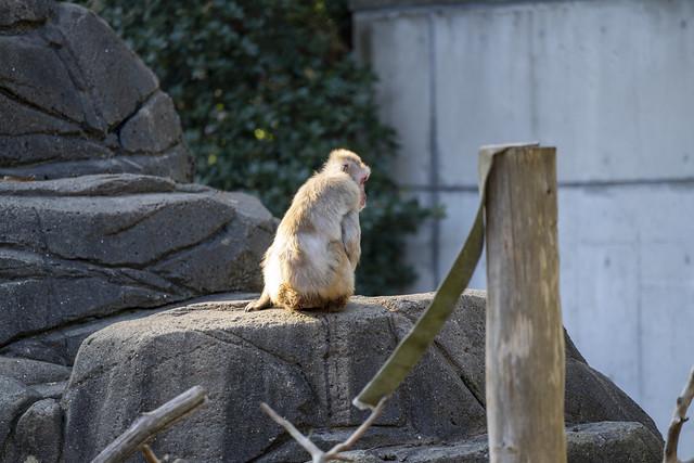 Chiba Zoological Park Dec 2019 α7RIV