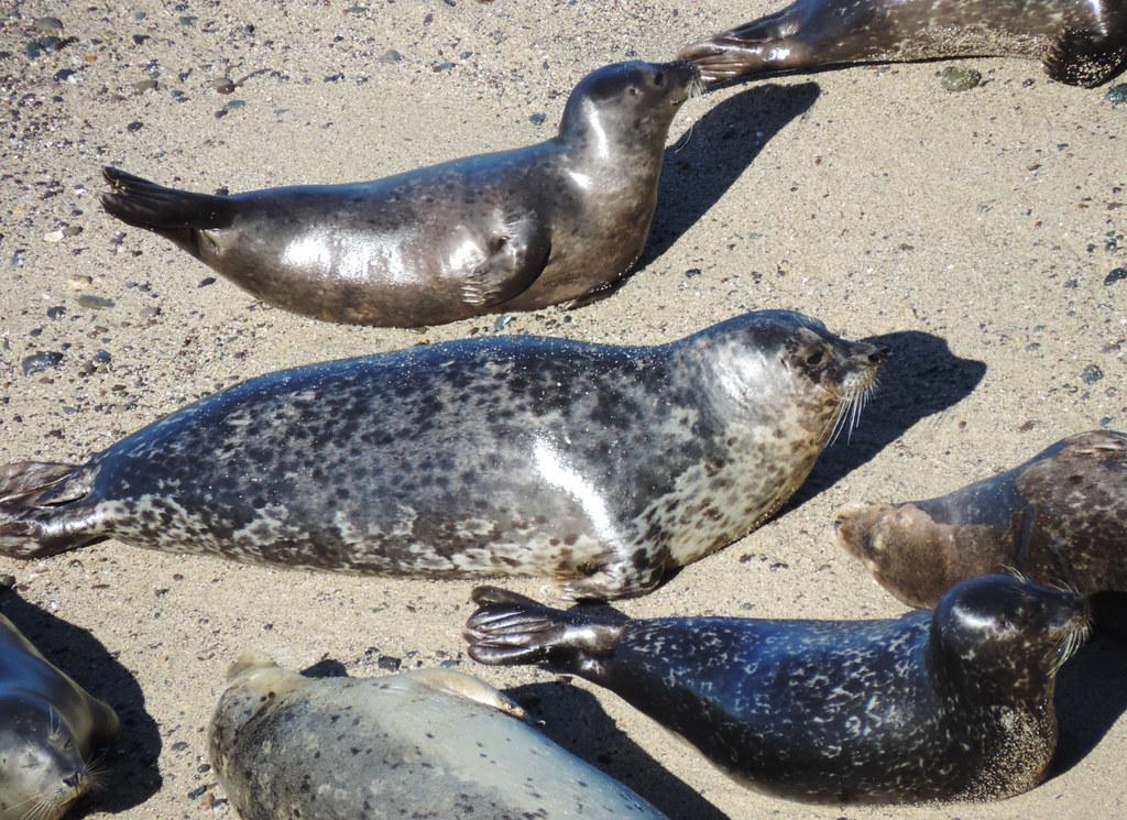 Travel Tips For California: Half Moon Bay, California, USA
