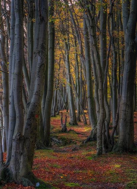 Trees at Pomle Nakke