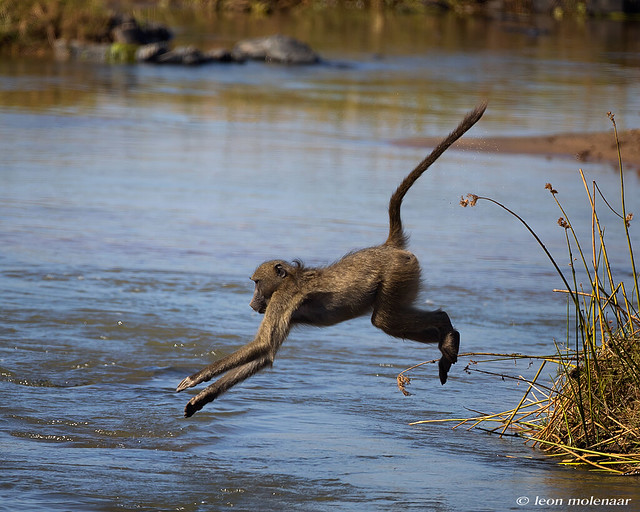 How to cross the Olifants River