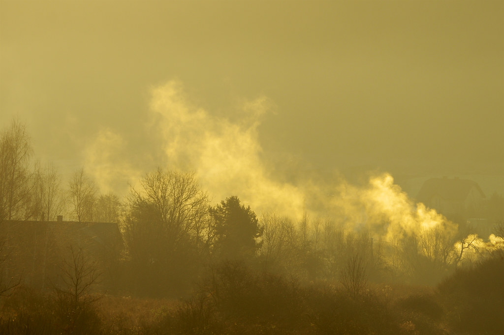 Złoty poranek / Golden morning