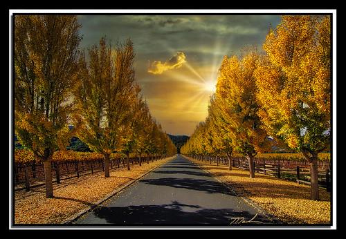 trees color road sunset luminar4 topazclarity photoshop layers napaca