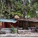Tree House    (tags:    india indian people holy tree varanasi street    )