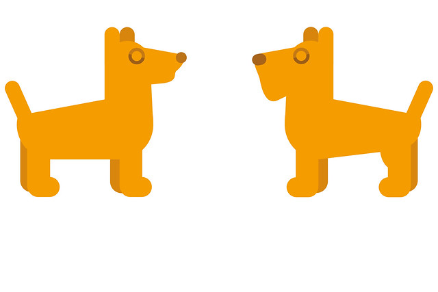 Two orange dogs face to face isolated on the white background