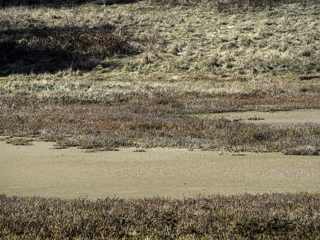 Salt Marsh, Point Pinole