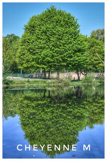 Reflet d'un arbre rempli de couleurs 😁