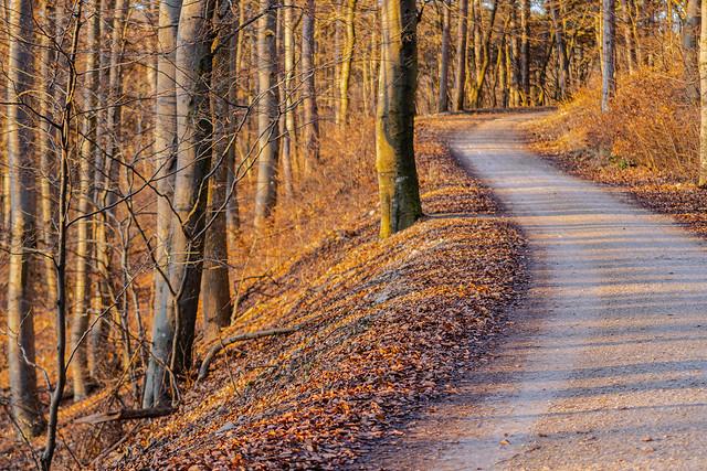 Forest path in Wienerwald