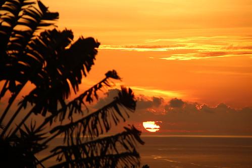 sunset tree traveler voyageur tropiques 974 lareunion laréunion france oceanindien bourbon bourbonisland