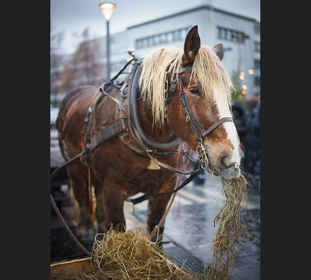Sleigh horse on a break