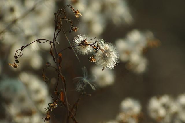 Пушистый октябрь / Furry october (2)